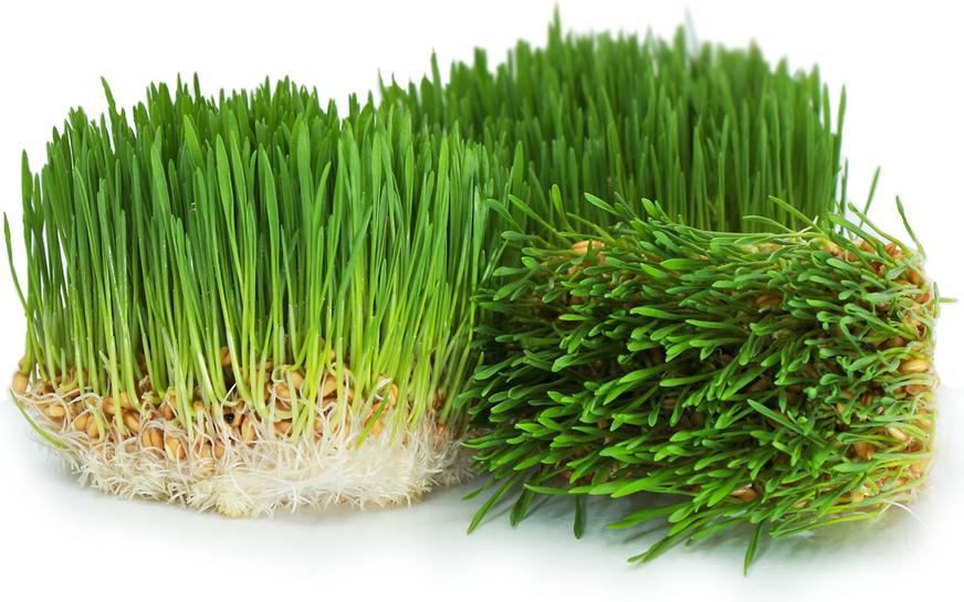wheat grass for brain tumor